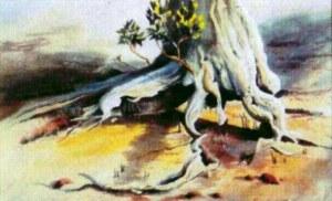 Coochie Mangrove Lorna Johnstone, watercolour 2004
